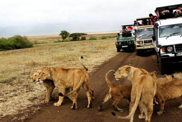 mengelilingi african serengeti dengan mobil